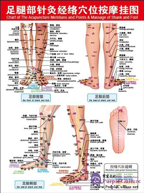 acupuncture foot chart: Chart of the acupuncture meridians and points massage of shank