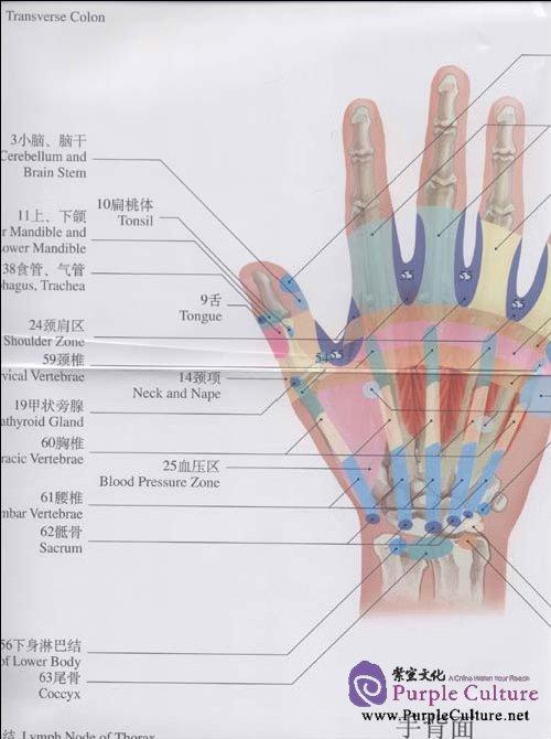 chart of the hand reflex zone isbn  9787509139196