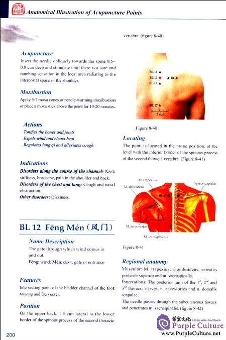 Sample pages of Anatomical Illustration of Acupuncture Points (2nd Edition) (ISBN:9787117147231)