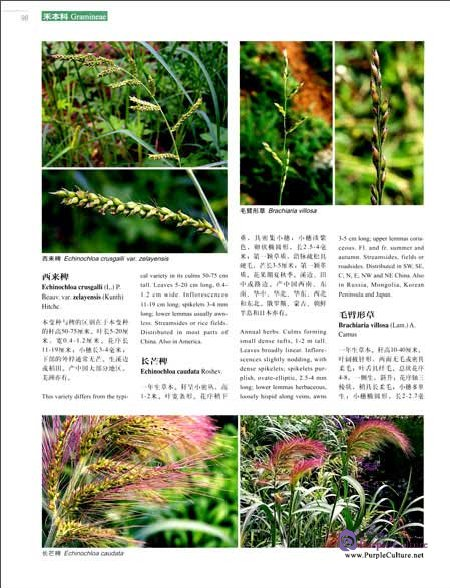 Sample pages of Higher Plants of China in Colour Vol VIII Angiosperms Typhaceae-Velloziaceae (ISBN:9787030470676)