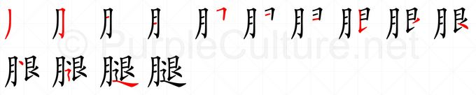 Stroke order image for Chinese character 腿