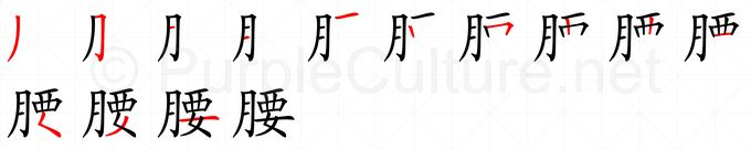 Stroke order image for Chinese character 腰
